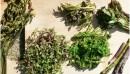 野草酵素サプリの飲み方 自然の恵みをたっぷり受けた植物の力